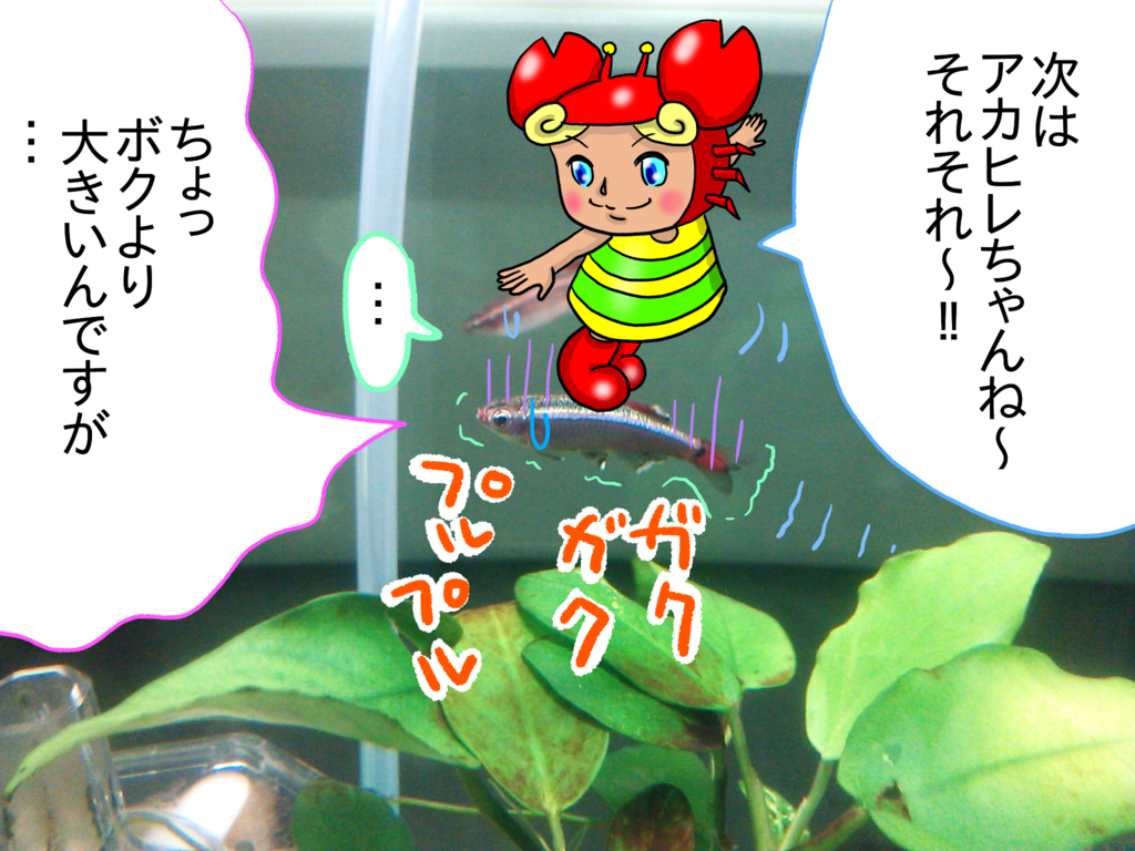 f:id:kanikanikaniyo:20161126161552p:plain