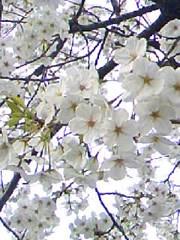 f:id:kanjinai:20100403192527j:image