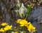 北国の春─リューキンカ