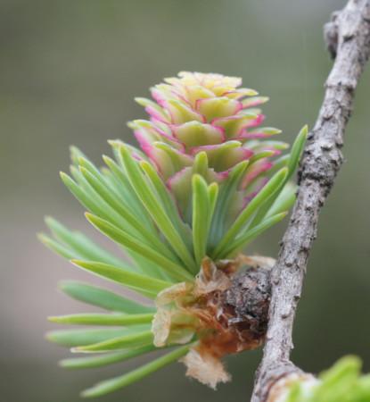 春の氷河期の森