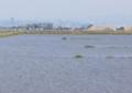 水没する被災水田1205