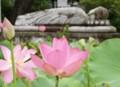 盆─蓮の称名寺にて