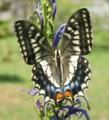 花と蝶─氷河期の森