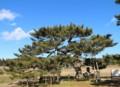 泉の一葉松2012.12.31