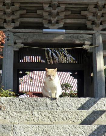 f:id:kanjisin:20130113155754j:image
