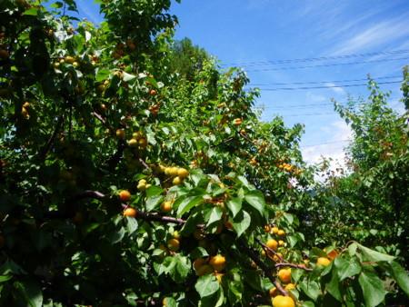 f:id:kanjuku107:20090621125908j:image