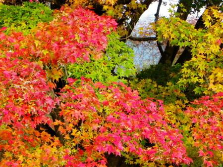 f:id:kanjuku107:20091021145221j:image