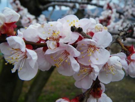 f:id:kanjuku107:20100405065857j:image