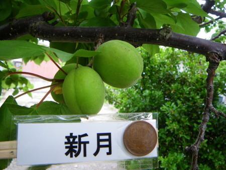 f:id:kanjuku107:20110528072527j:image