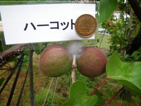 f:id:kanjuku107:20110528073423j:image
