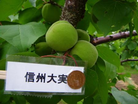 f:id:kanjuku107:20110617152237j:image