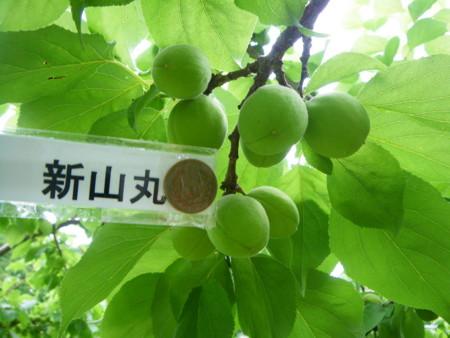 f:id:kanjuku107:20110617152442j:image