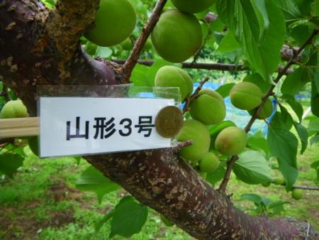 f:id:kanjuku107:20110617152540j:image