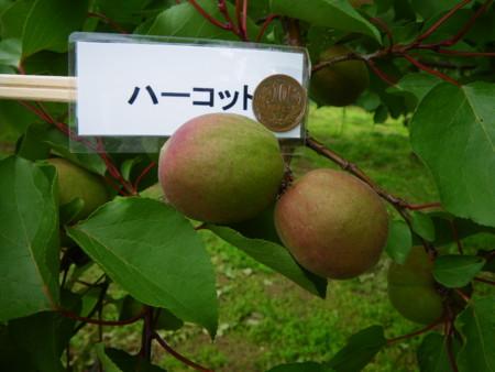 f:id:kanjuku107:20110617152611j:image