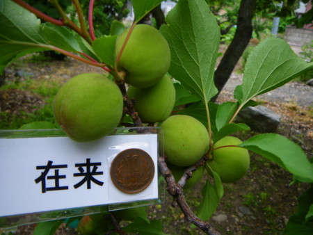 f:id:kanjuku107:20110617153308j:image