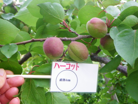 f:id:kanjuku107:20120612205142j:image