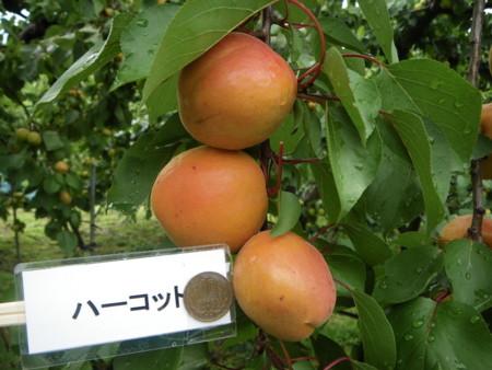f:id:kanjuku107:20120612205536j:image