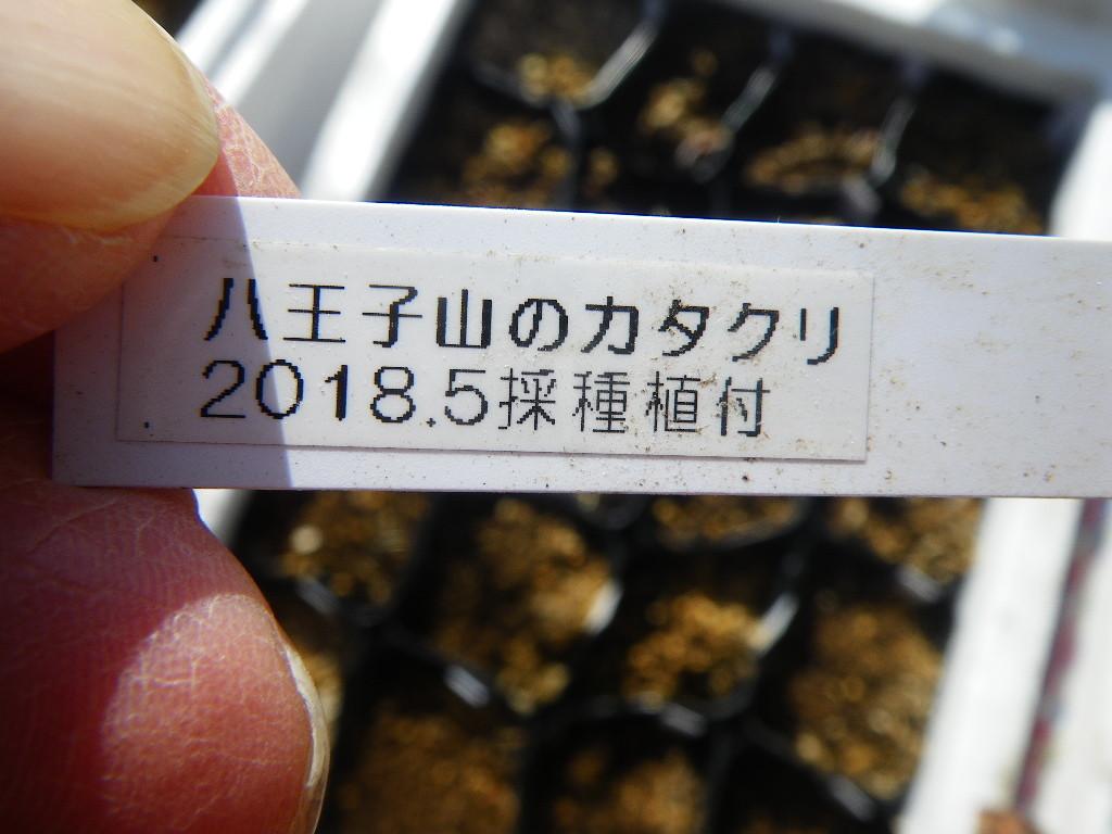 f:id:kanjuku107:20190306204758j:plain