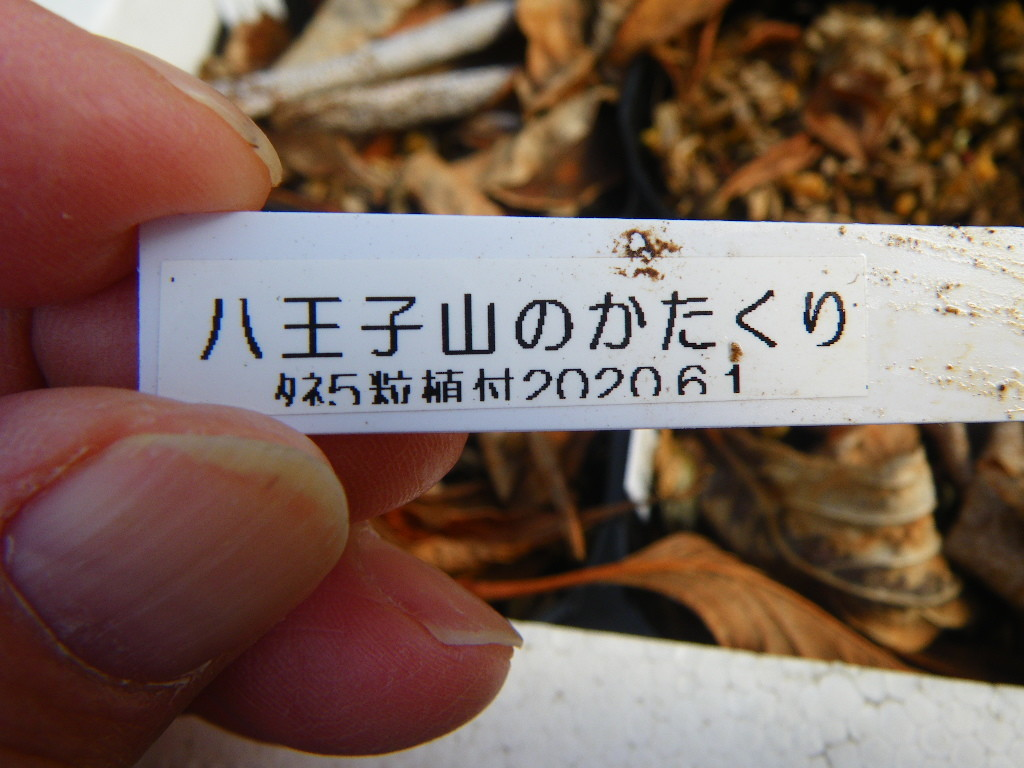 f:id:kanjuku107:20210201150251j:plain