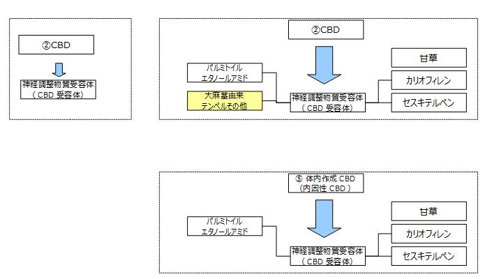 f:id:kanjuseitosyakaitojounetsu:20210220200219p:plain