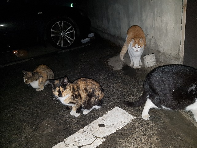 f:id:kankokuneko:20180111175121j:image