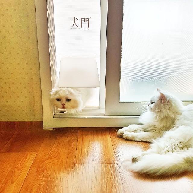 f:id:kankokuneko:20190527174416j:image