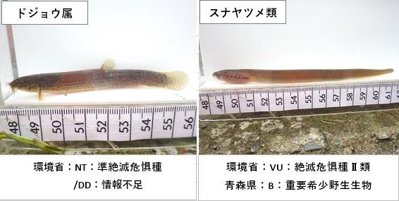 f:id:kankyokoukyo:20201214002636j:plain