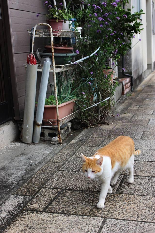 f:id:kannawadokusho:20170926184726j:plain