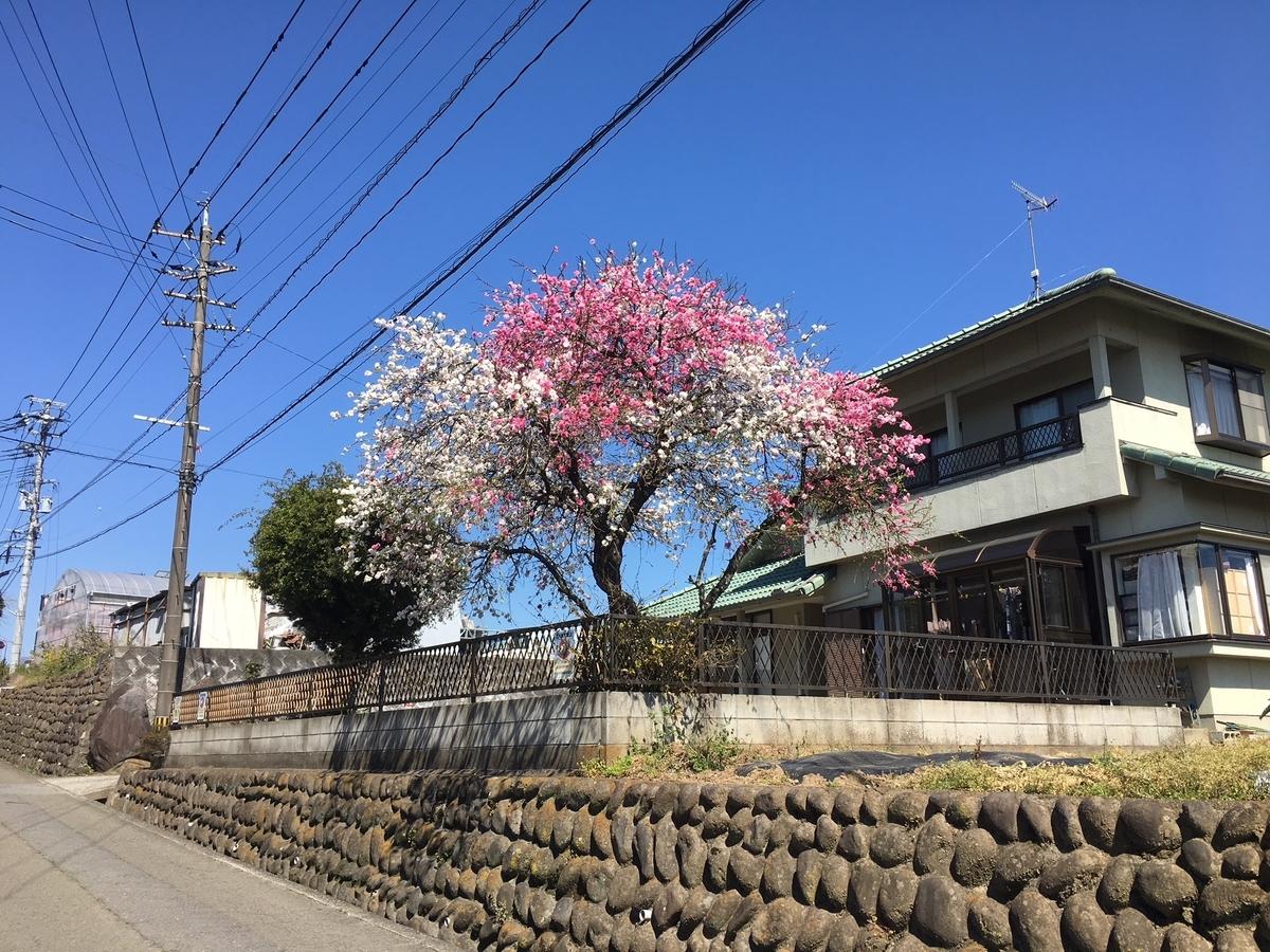 f:id:kannawadokusho:20190407102718j:plain