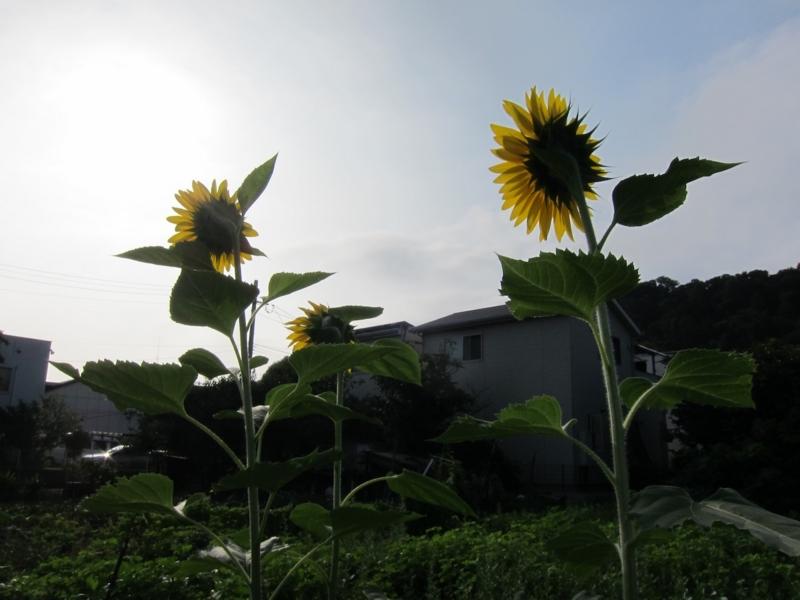 f:id:kannawadokusho:20210829081725j:plain