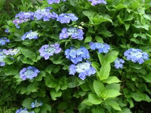 f:id:kanokichi:20110615082349j:image