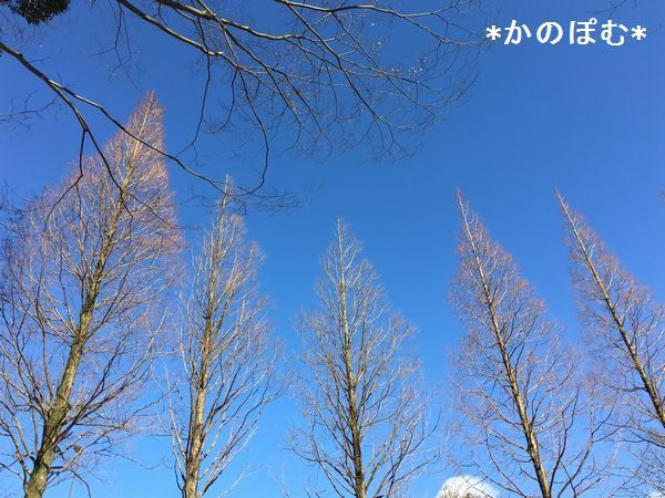 f:id:kanopom:20170124154643j:plain