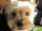 [犬][ルル]