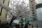 [東京][渋谷][花][桜]