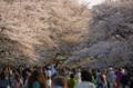 [上野][花][桜]