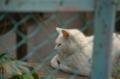 [東京][谷中][猫]
