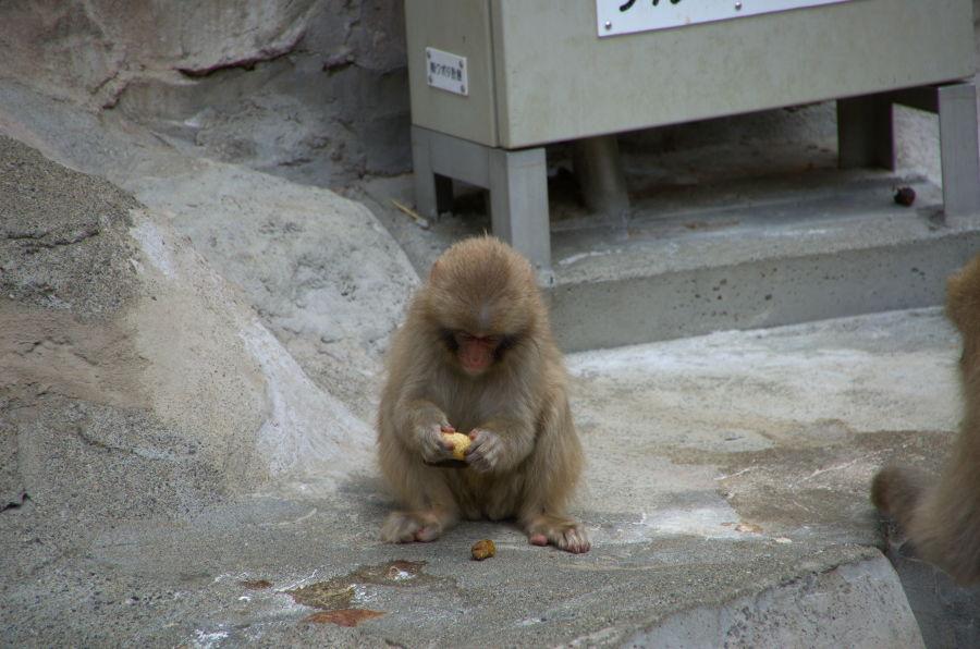 [上野][上野動物公園]