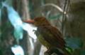 [上野][上野動物公園][鳥]