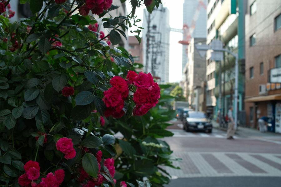 [月島][花]