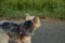 [ルル][犬]