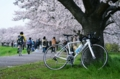 [自転車]桜とEmonda SL5