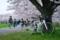 桜とEmonda SL5