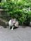 広島市西区-三滝寺