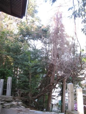 f:id:kanototori:20090319201245j:image