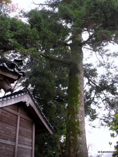 f:id:kanototori:20111119014921j:image