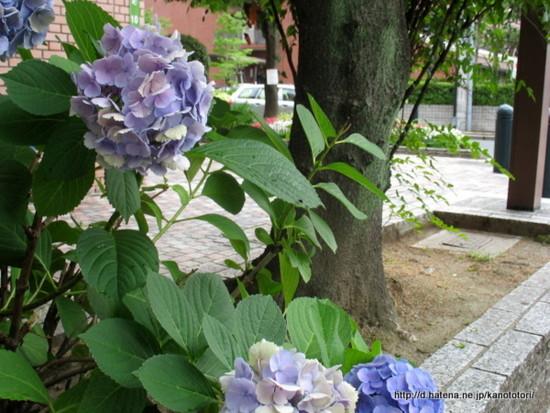 f:id:kanototori:20111221143224j:image