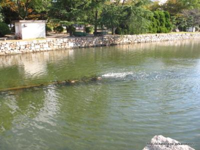 f:id:kanototori:20121124130100j:image