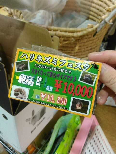 f:id:kanpachikobou:20170110154310j:image
