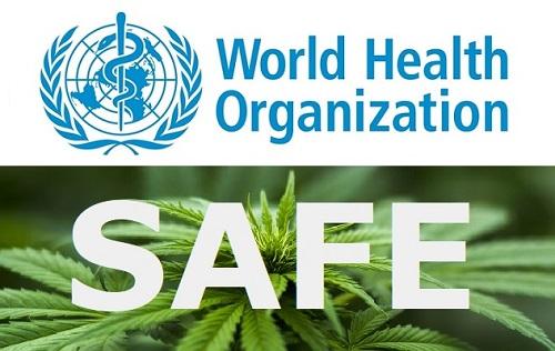 WHO(世界保険機関)も認めるCBDの安全性!