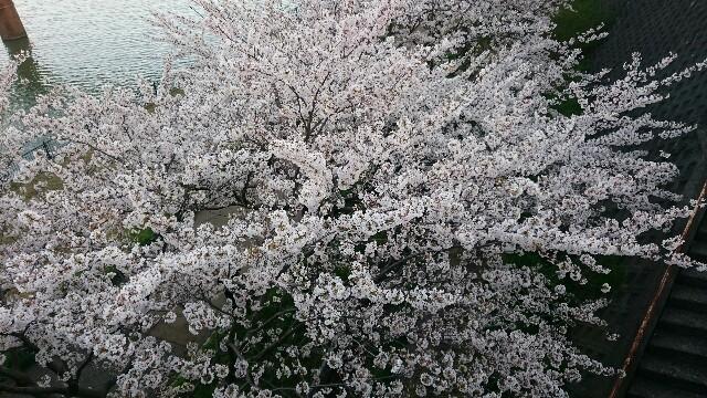 f:id:kantanakamura:20170414193528j:image